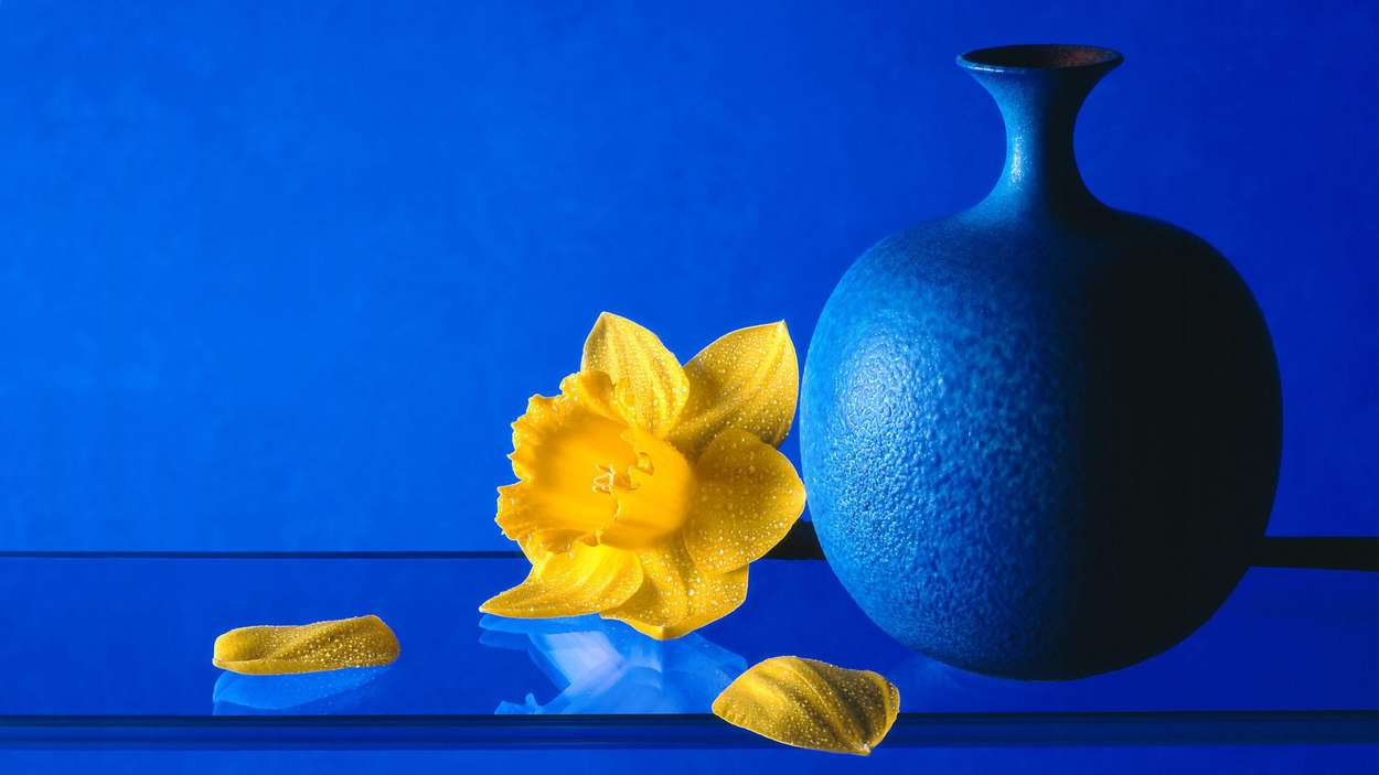 Daffodil with blue vase on a glass shelf by Bernard Bleach Photography